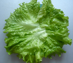salatnye-listiya-na-blude