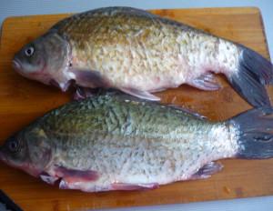 ochishhennaya-ryba