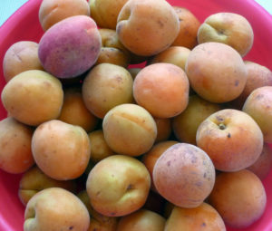 rumyanye-abrikosy