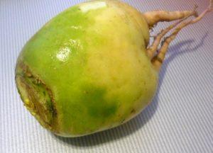 zelenaya-redka